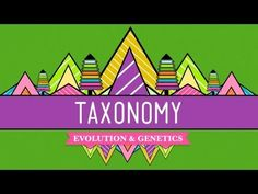▶ Taxonomy: Life's Filing System - Crash Course Biology #19 - YouTube