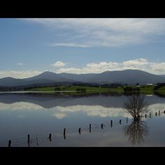 Coming into Healesville our cow paddocks are a bit flooded this year. Winter wet wonderful
