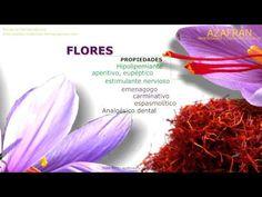 Características del Azafrán. Nombre científico. Contenido y principios activos del Azafrán. Propiedades del Azafrán. Usos medicinales del Azafrán. http://www.plantas-medicinal-farmacognosia.com/productos-naturales/azafran/