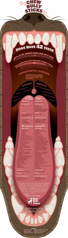 #dog #infographic about dog dental problems and the chews used to treat them! #dogcare #doghealth // BestBullySticks.com