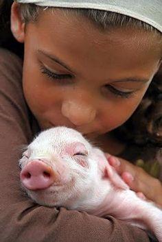 Cute alert! #aww #pig #animals #adorable