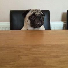 pugsworld, Head of the table