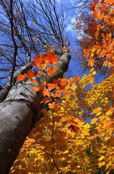 Autumn colors by George Bloise, via 500px