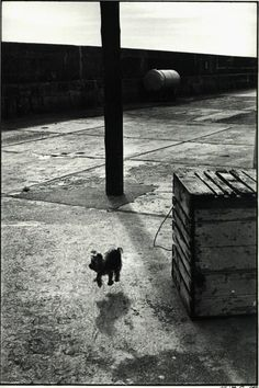 ELLIOTT ERWITT  Ballycotton, Ireland, 1986