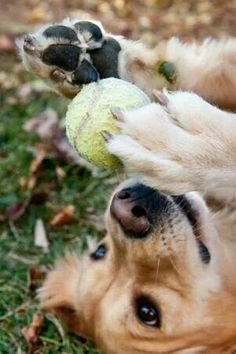 Happiness is a tennis ball...