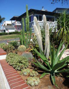 Xeriscape cactus, succulent, agave, ocotillo...