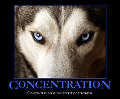 Concentration is the secret of strength.