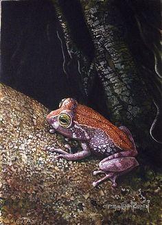 Shrub Frog -endangered species frog endang, shrub frog