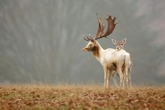 fallow love by Mark Bridger on 500px