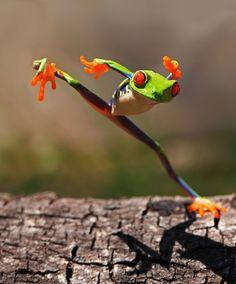 Kungfu Frog by Shikhei Goh