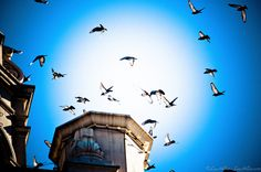 Taking Flight by Lee Hiller #Photography and #Design