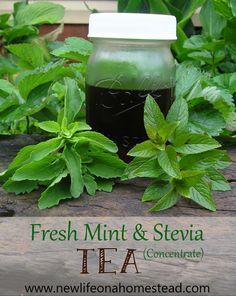 Peppermint Tea With Fresh Stevia