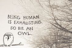 Story of my life. #owl #owls