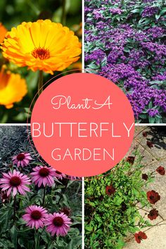 20 Flowers For a Butterfly Garden --> http://www.hgtvgardens.com/photos/flowering-plants-photos/butterfly-garden-flowers?soc=pinterest