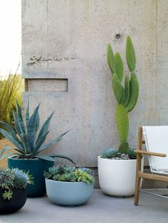 planters with cactus and succulents