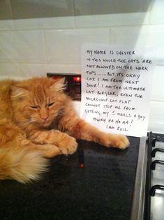 Cat Shaming | Blogs - CAT FRIDAY: Cat Shaming