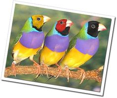 Los pájaros no tienen dientes – Gloria Fuertes