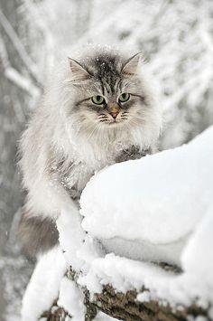 Cat in a winter wonderland