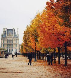 #Paris in the fall. paris, fall leaves, jardin, tree, autumn leaves, seasons, france, travel, place