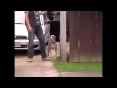 Click here to watch how to train your dog not to pull the leash by professional dog trainer Doggy Dan http://www.howtobeadogtrainer.co.uk/basic-training/  #dogtraining #leash