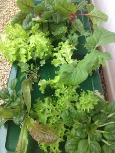 Images About Hydroponic Gardening On Pinterest Hydroponics