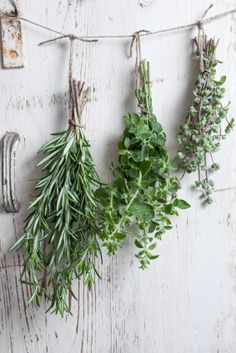 Preserving Your Herbs