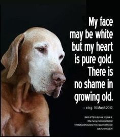 Dog wisdom <3