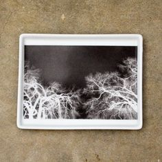 Branches X-Ray Tray Small now featured on Fab.