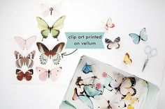butterfly clip art _Free download