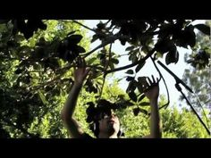 Burt's Bees | Music from Nature by Diego Stocco