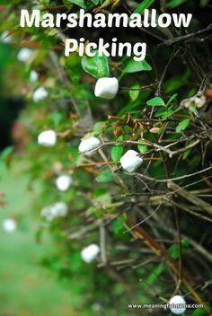 Marshmallow Picking.  :)