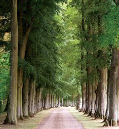 dirt roads lined with trees