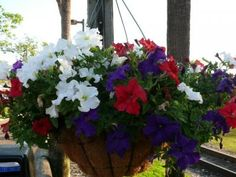 """Patriotic Floral Hanging Basket.  A Gardening """"How to"""" from a BG Horticulturist: Make Your Own Floral Hanging Basket 