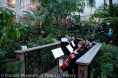 The Butterfly Rainforest serves as a lush and inspiring backdrop for this classical quartet. rainforest serv, butterfli rainforest, inspir backdrop