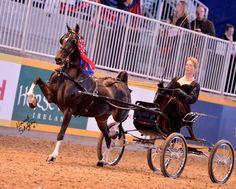 mojo hors, equestrian style