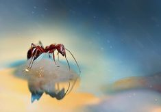 Macro Photography by Lee Peiling