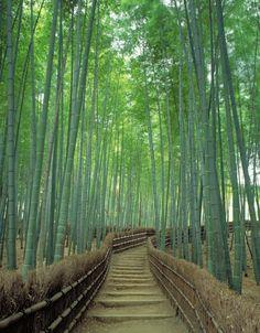 bamboo walkway, garden paths, bamboo grove, japan holiday, sagano bamboo, heritag site, travel, place, moss templ