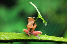 frog under umbrella....