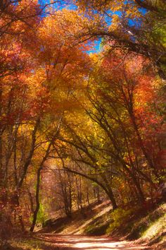 autumn, 4th of July Canyon, The Cibola National Forest and Grasslands, New Mexico