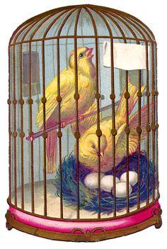 Vintage Image - Fabulous Bird Cage - Canaries - Nest
