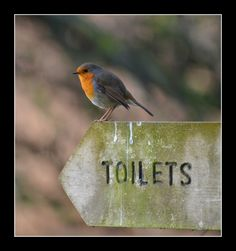 Bathroom Humor: A bird points the direction to the toilet.