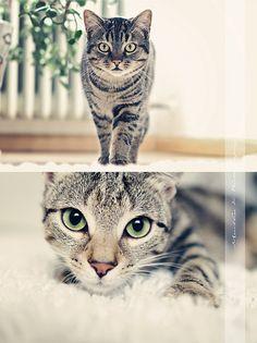 Kitteh!!!     #cats #kitty #kitty_cats #kitteh #feline #pussy_cat
