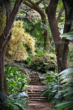 Kauai, Hawaii Allerton Botanical Gardens! misarae