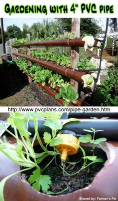 PVC pipe gardening.  This is a pretty awesome space saver.  I can picture this hanging off my brick wall in the backyard...