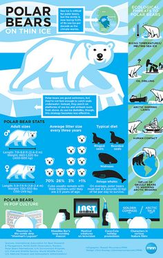 The more we know the more we can help the polar bears. #infographic #MindfulLiving OurMLN.com