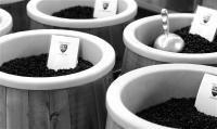 Jameson Brown coffee roasters- Pasadena