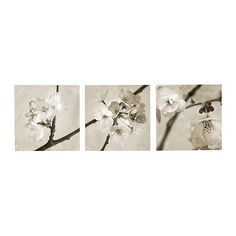 IKEA - PJÄTTERYD, Picture, set of 3, Motif created by Heather Johnston.The picture has extra depth and life because it's printed on high quality canvas.The picture stands out from the wall in an attractive way because it continues around the edges of the canvas.