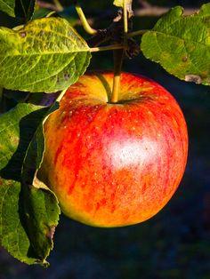 Apple Cider Vinegar Wonder Remedies