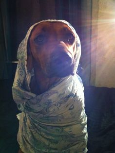 Mini, my rhodesian ridgeback as Holy Mary