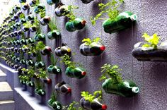 Soda Bottle Planters - 20 Decorative And Practical DIY Spring Projects